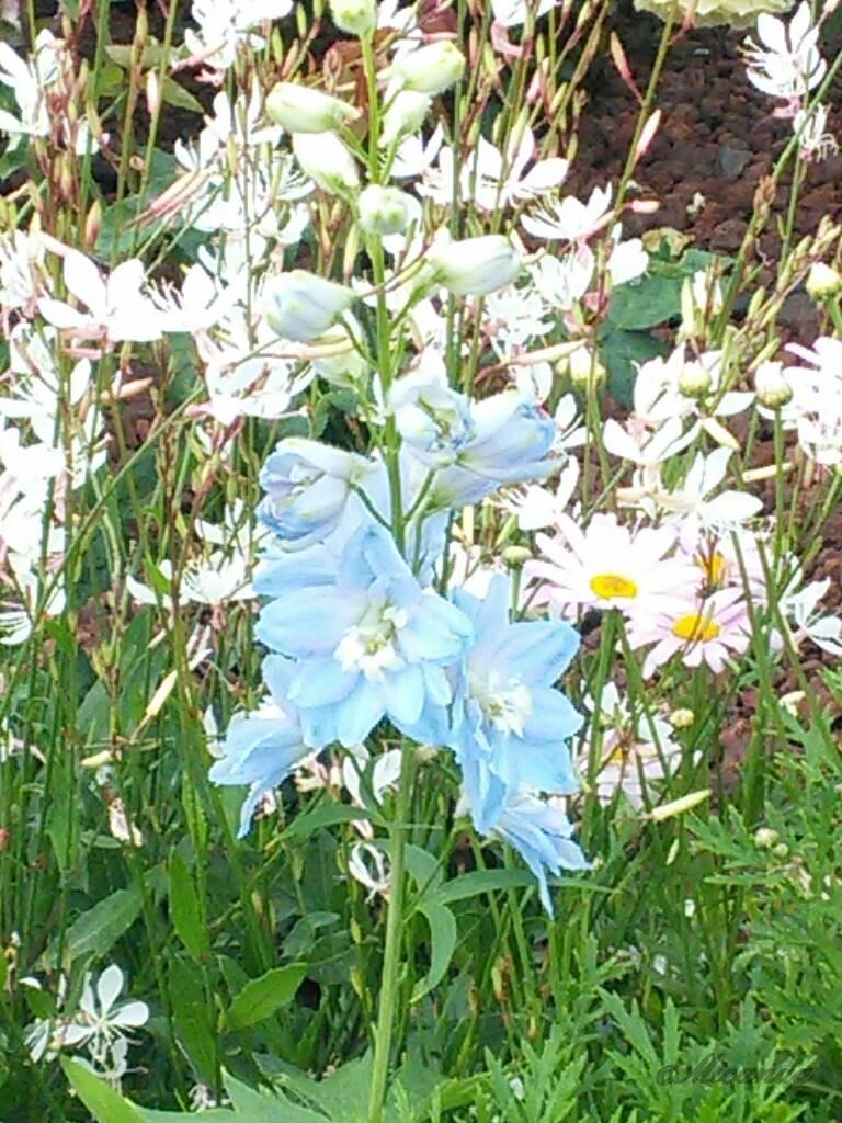 横浜の山下公園の花