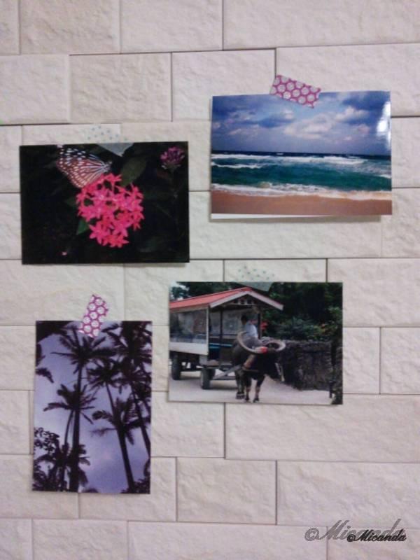 沖縄旅行の時の花、海、牛の写真