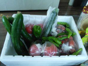 母から送られてきた家庭菜園の野菜たち