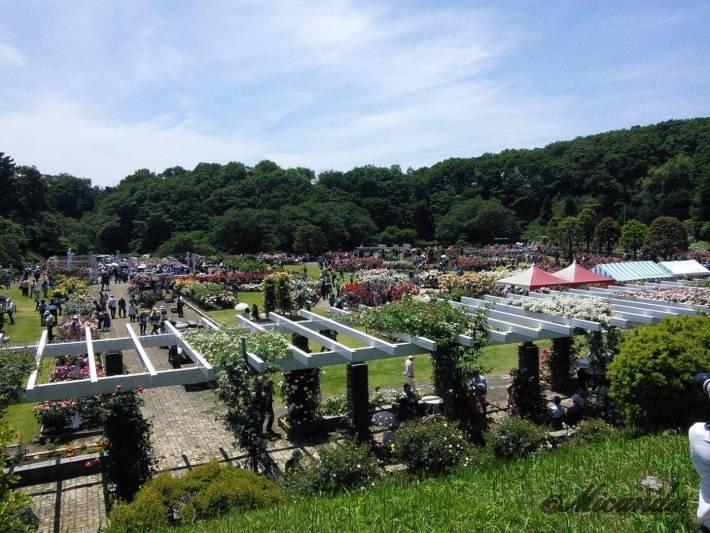 生田緑地ばら苑の高い位置からの苑内の景色