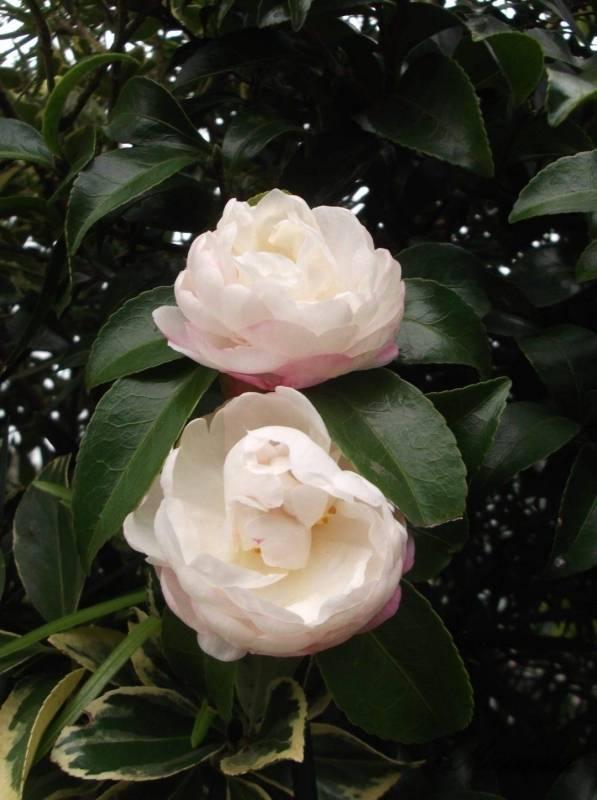 鎌倉山に咲いている花