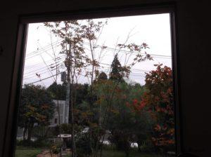 オンザヒルコーヒーの窓際の広いテーブル席から見える庭