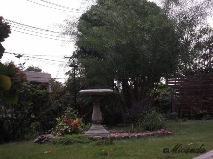 オンザヒルコーヒーの小鳥の集う庭