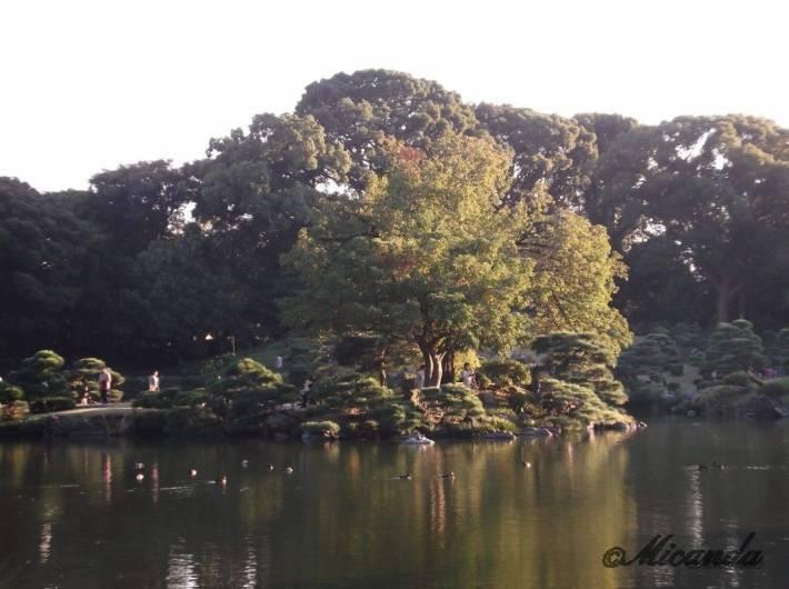 清澄庭園の鶴島