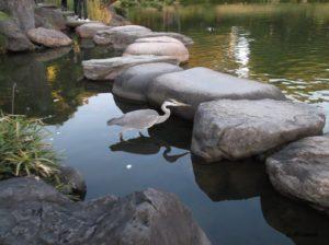 清澄庭園の大泉水にいた鳥