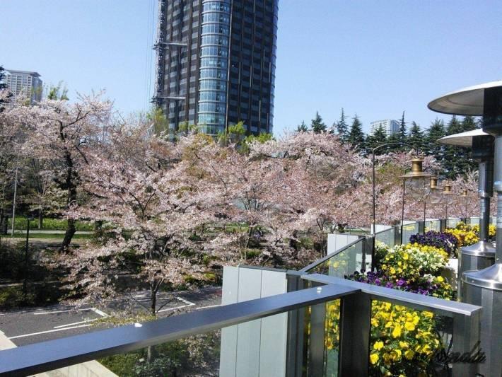 ミッドタウンの桜1